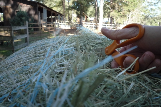 Cutting away the twine....